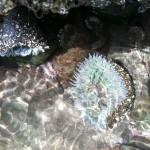 Muir Beach Tide Pool